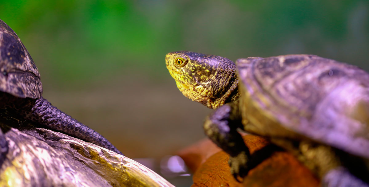Reptiles and Tortoises
